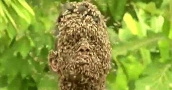 Đây là lý do vì sao ong mật sau khi đốt người xong lại chết