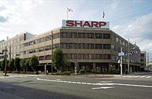 Sự bảo thủ đã giết Sharp và các các gã khổng lồ Nhật Bản