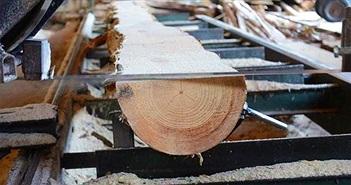 Phát hiện mùn cưa, phôi gỗ, vỏ bào… có thể giúp kết dính bê tông chắc hơn