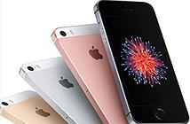 Apple lộ mã iPhone SE 2 đăng ký tại châu Âu