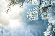 Băng và tuyết khác nhau như thế nào?