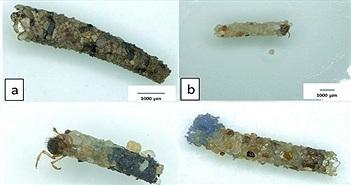 Phát hiện loài côn trùng giúp con người gom rác nhựa
