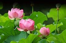 """""""Điểm danh"""" Quốc hoa của các quốc gia Đông Nam Á"""