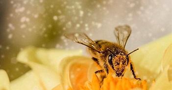Phát hiện bằng chứng loài ong hiểu số 0 nhỏ hơn 1?