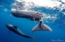 Cảnh báo rùng mình từ cá voi có đuôi hoại tử ám ảnh