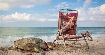 Đau đớn cảnh rùa biển bị treo cổ bởi ghế gấp của con người