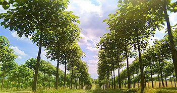 """Loài cây này có thể sẽ là """"cứu tinh"""" cho Trái đất của chúng ta!"""