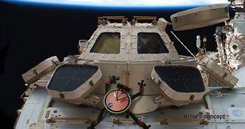 Phát triển công cụ bám dính trên vũ trụ lấy cảm hứng từ chân tắc kè