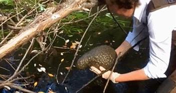 Sinh vật như não người xuất hiện trong hồ, khoa học tiết lộ...