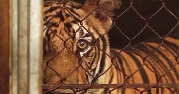 """Giải cứu động vật hoang dã: Bài học từ sự kiện """"chưa từng có tiền lệ"""""""