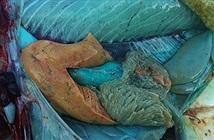 Cận cảnh loài cá có thịt xanh lè dài đến 1m đặc biệt nhất hành tinh