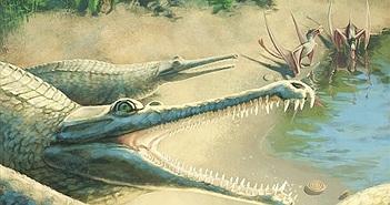 Sự thật bất ngờ đằng sau hóa thạch cá sấu kỷ Jura dài gần 4,5 mét