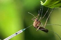 Muỗi cái không chịu yêu đương với muỗi đực biến đổi gene, dự án tiêu diệt loài muỗi thất bại