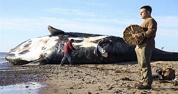 Thêm một loài cá voi có khả năng sắp tuyệt chủng