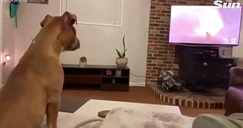 """Chó """"khóc"""" khi xem bộ phim hoạt hình yêu thích gây sốt"""