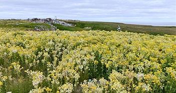 Choáng váng lãnh nguyên Bắc Cực biến thành cánh đồng cỏ hoa rực rỡ