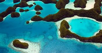 Kinh ngạc đảo quốc cấm kem chống nắng cứu sinh vật này