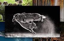 Cuộc chiến của thỏ đạt giải cao nhất tại Cuộc thi nhiếp ảnh thế giới