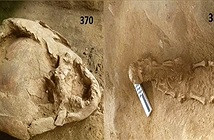 Mũ bảo hiểm làm từ hộp sọ hàng nghìn năm trước