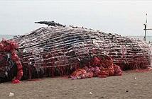 Cá voi khổng lồ chết dạt bờ biển