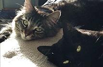 Hai chú mèo được ở căn hộ thuê riêng 1.500 đô mỗi tháng