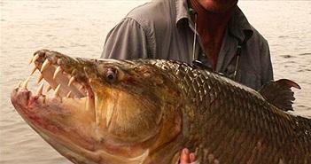 13 loài thủy quái nước ngọt nguy hiểm nhất trên thế giới