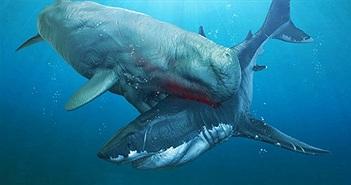 Cá voi cổ đại Melvillei - Cơn ác mộng của siêu cá mập Megalodon