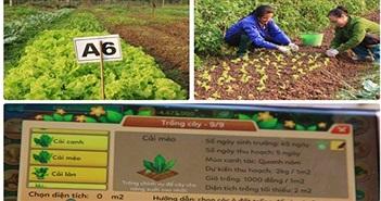 Chuyện thật như đùa: Chơi game ảo thu rau thật ở Hà Nội