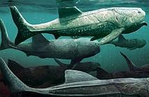 Cá bọc giáp khổng lồ chuyên há miệng chờ mồi