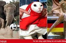 Mèo Achilles, bạch tuộc Paul hay lạc đà Shaheen dự đoán kết quả World Cup chính xác hơn?