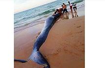 Xác ông cá voi nặng 2 tấn, dài 5m dạt vào bờ biển Khánh Hoà