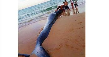 Xác 'ông' cá voi nặng 2 tấn, dài 5m dạt vào bờ biển Khánh Hoà