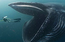 Bạn có thể sống trong bụng cá voi?