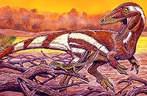 Khai thác đá, đụng độ tổ tiên quái thú không cánh và hung ác của loài chim