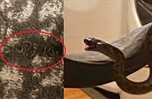 Thấy rắn chui gầm giường phòng ngủ, kiểm tra phát hoảng với cảnh tượng bên trong