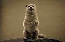 Hành động của chú chó khiến con người phải suy ngẫm