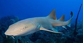 """Bị cá mập truy sát, người đàn ông tung vũ khí """"độc"""""""