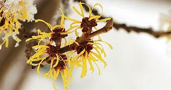 Loài cây kì lạ có khả năng… bắn hạt giống bằng lực của một khẩu súng thế kỷ 19