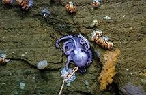 Thành lập vườn bảo tồn đại dương đầu tiên ở Đại Tây Dương