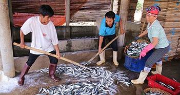 Bộ Y tế: Hải sản vùng 25km đáy biển miền Trung chưa an toàn