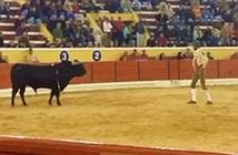 Khủng khiếp cảnh bò tót nổi điên húc chết võ sỹ đấu bò