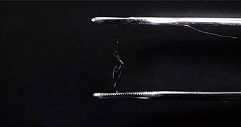 Chế tạo thành công vật liệu nhựa sinh học có khả năng phân hủy