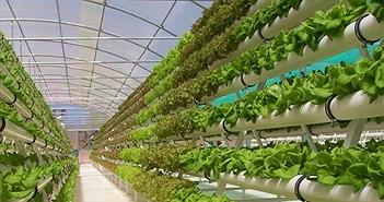 Vì sao trồng cây trong nhà kính có thể gây ảnh hường nặng nề đến môi trường?