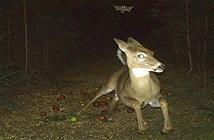 Ảnh cuộc sống về đêm của động vật hoang dã gây choáng