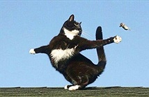 Ngoạn mục cảnh mèo khoang nhảy bản tango chết chóc với chuột