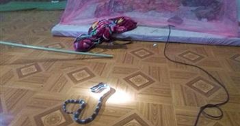 Hoảng hồn rắn cực độc bò vào giường ngủ nhà dân giữa đêm