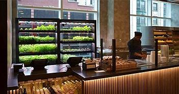Farmshelf - Giải pháp trồng rau ngay trong bếp nhà bạn