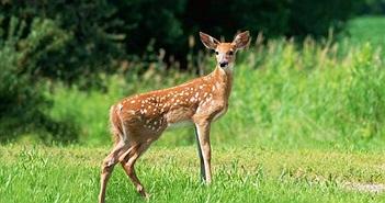 """Thợ săn bắn giết cả trăm con nai và """"báo oán"""" khó tin"""
