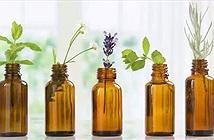 Hợp chất từ thực vật giúp chữa lành vết thương