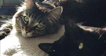 Người đàn ông thuê căn hộ 35 triệu đồng/tháng cho 2 chú mèo ở